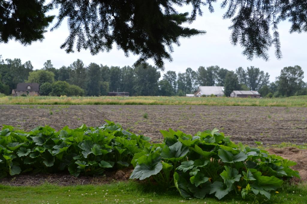 Berg's Shell Road Farm