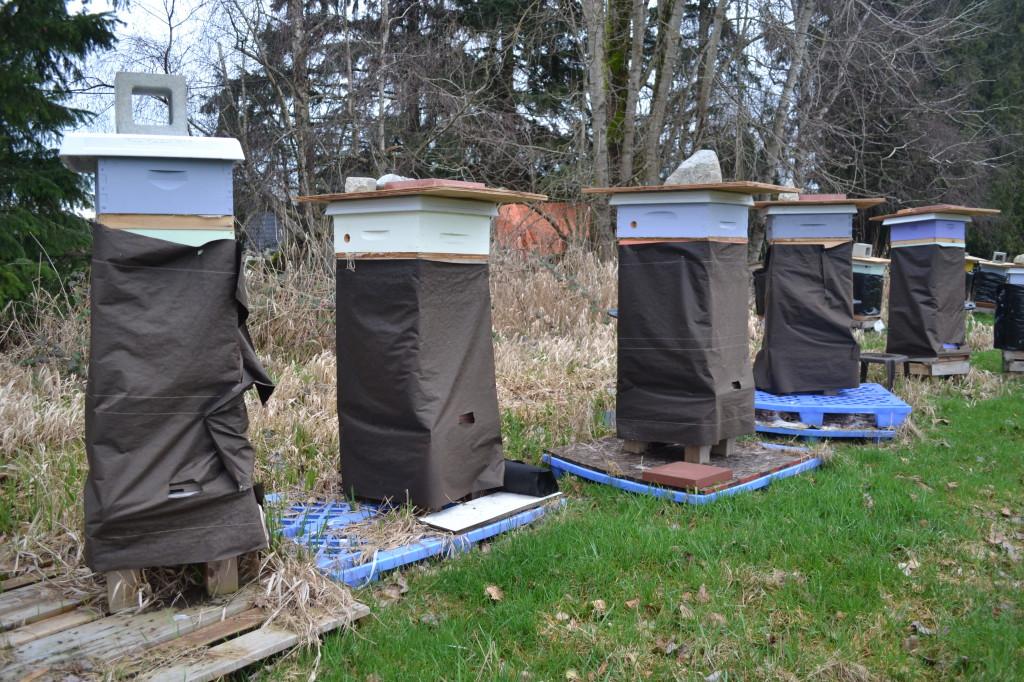 De Putter Bees