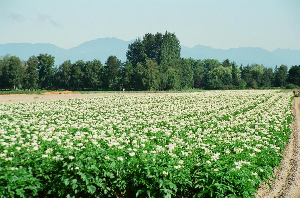 Photo 1 Potato field, Finn Road