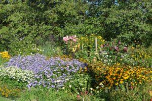 Steve Bridger's garden