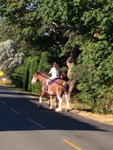 Horses on Finn Road
