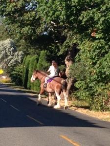 Horses on Finn Road